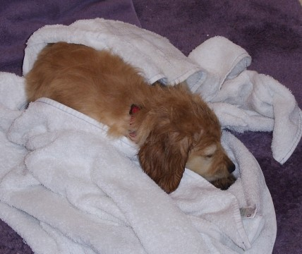 Bath Time - Joy's Pics of Pup