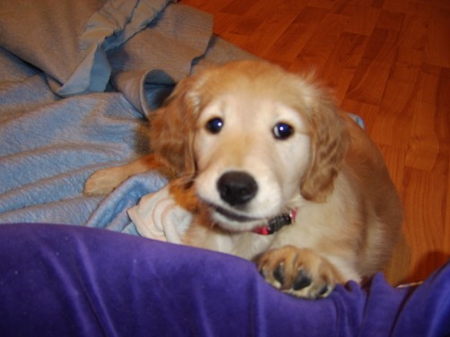 Pup - Joy's Pics of Pup
