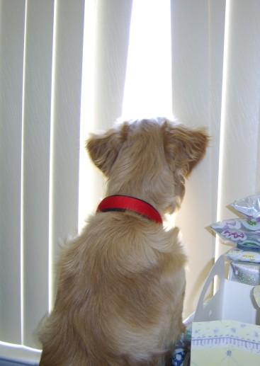 Nosey - Joy's Pics of Pup