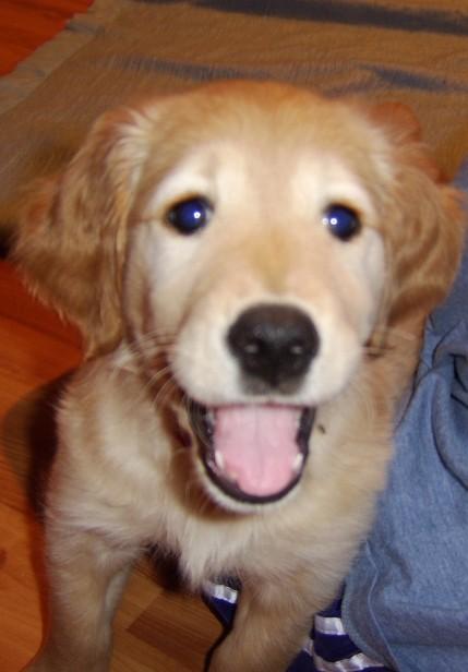 Smiling Pup - Joy's Pics of Pup