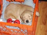 Babpy Pup Sleeping – Joy's Pic ofPuppy