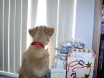 Window – Joy's Pic ofPuppy